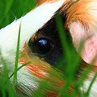 Wilbur by Melissa Ann Blair