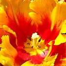 Tulip Flowers Photography Calenda Tulips Gardens by BasleeArtPrints