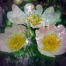 Hear My Cry by Lozzar Flowers & Art