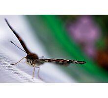 Wingspan Photographic Print