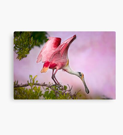 April Roseate Canvas Print