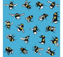 Garden Bumblebees Photographic Print