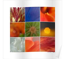 Abstracts - Patterns in Nature Poster