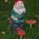 The Gnome amongst the Toadstools by lettie1957