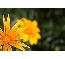 Like the Sun Photographic Print