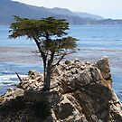 Lone Cypress by SkoyaMoore