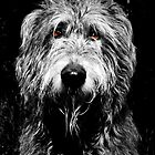 Hazard - Our Irish Wolfhound by SwampDogPhoto