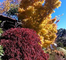 Autumn in Mt Tomah by StuartR