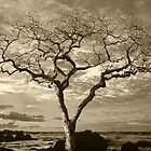 Tree By The Sea by Peter Stratton