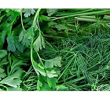 Organically Green Photographic Print