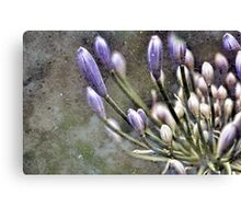 Awakenings Canvas Print
