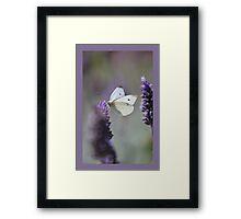 Lavender Butterfly Framed Print