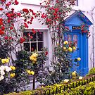 Entrance, English cottage, roses. UK by johnrf