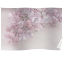 Oh So Gentle - Lilac Sprig Macro Poster