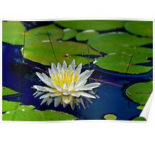 Lily Pad Blossom Poster