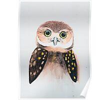 Burrowing Owl Poster