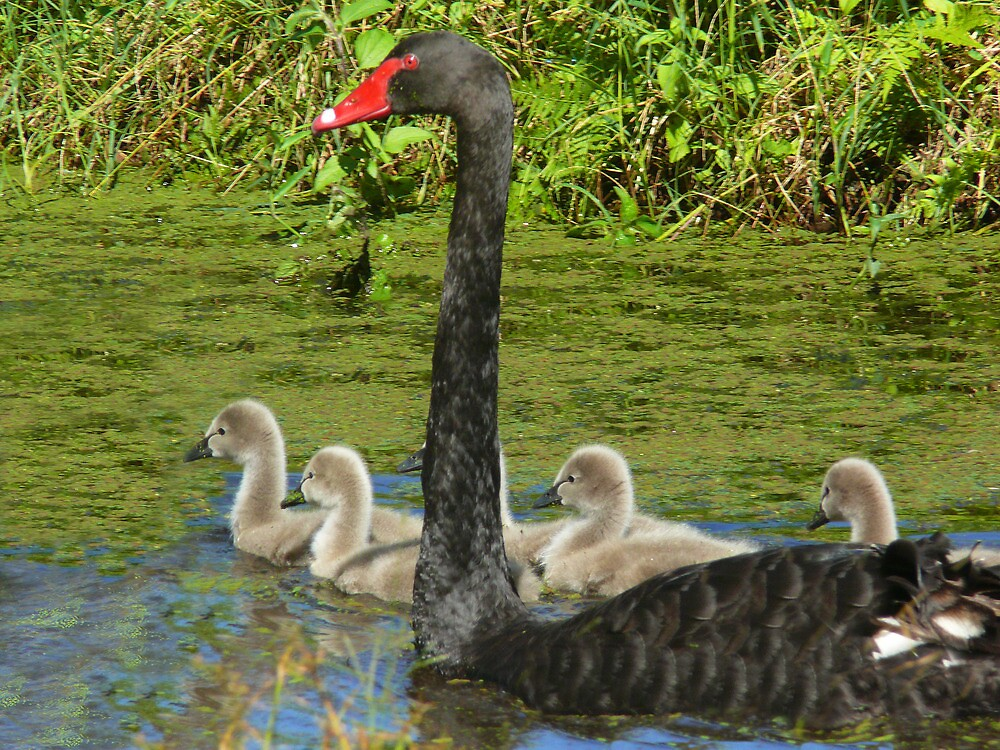 Out With Mum by byronbackyard