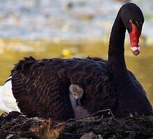 I'm a mum - at last! by Joy Rensch