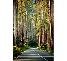 The Black Spur Photographic Print