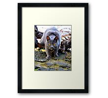 Get out of my way-Melbourne Framed Print