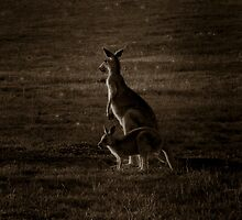 Kangaroo Mother & Joey - Melbourne, Australia. by Ramzee86