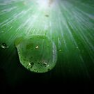 Droplet on Fern. by Ramzee86