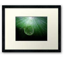 Droplet on Fern. Framed Print