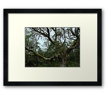 Forest of Moss and Lichen Framed Print