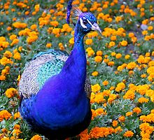 blue bird by Daidalos