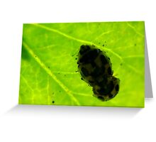 Mating Bugs Greeting Card