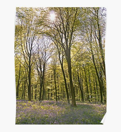 Blue-bell wood in Hampshire Poster