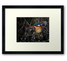 Malachite Kingfisher Framed Print