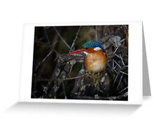 Malachite Kingfisher Greeting Card