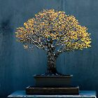 Bonsai Glow by GardenJoy