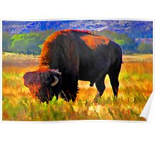 Plains Bison Poster