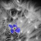 Blue Velvet by geoff curtis