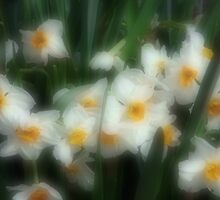 Daffodil Surprise by CarolM