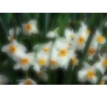 Daffodil Surprise Photographic Print