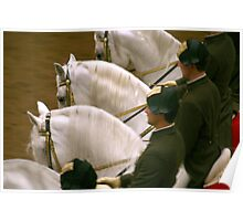 Lipizzaner Stallions in Formation Poster