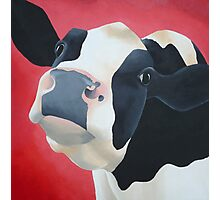 Cow red Photographic Print