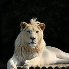 Humble King of the Jungle - WHF by Corrine Symons