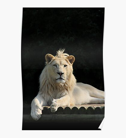 Humble King of the Jungle - WHF Poster