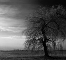 WIND IN THE WILLOW by SIMON COLLINS