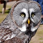 Grey Owl by Jim Wilson