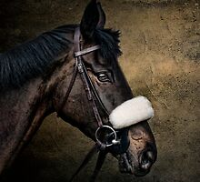 The Thoroughbred by Tarrby