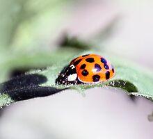 Snug as a Bug by missmoneypenny