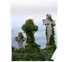 Vine covered head stone Poster