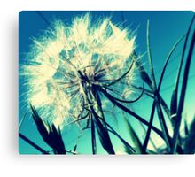 05-05-11:  Looking For The Sun Canvas Print
