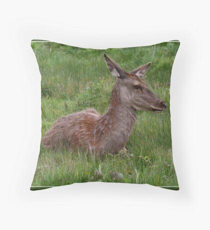 Resting red deer doe. Throw Pillow