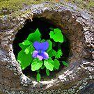 Garden by Tim Wright